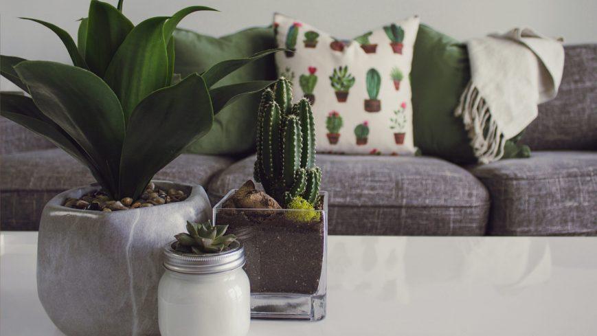 Plantas en hogar