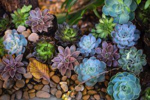 Plantas en el hogar suculentas