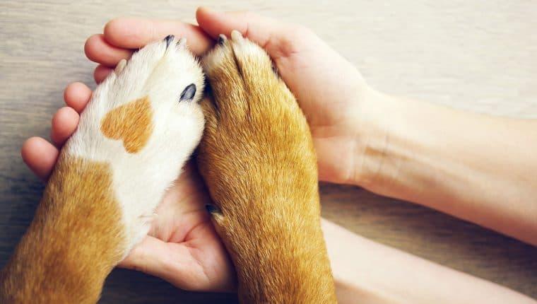 día de los enamorados con tu perro
