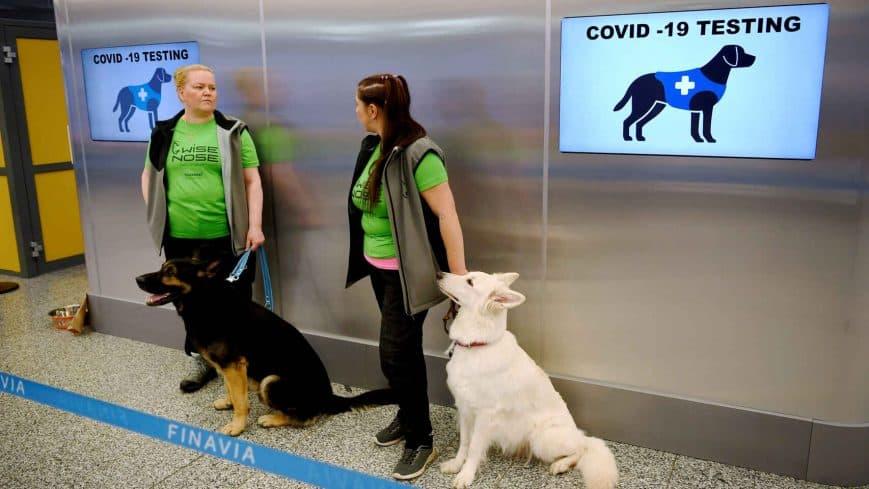 perros-detectan-coranavirus