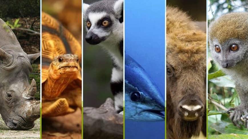 Algunos de los animales más extraños de nuestro planeta están caminando sobre las cuerdas de la extinción.