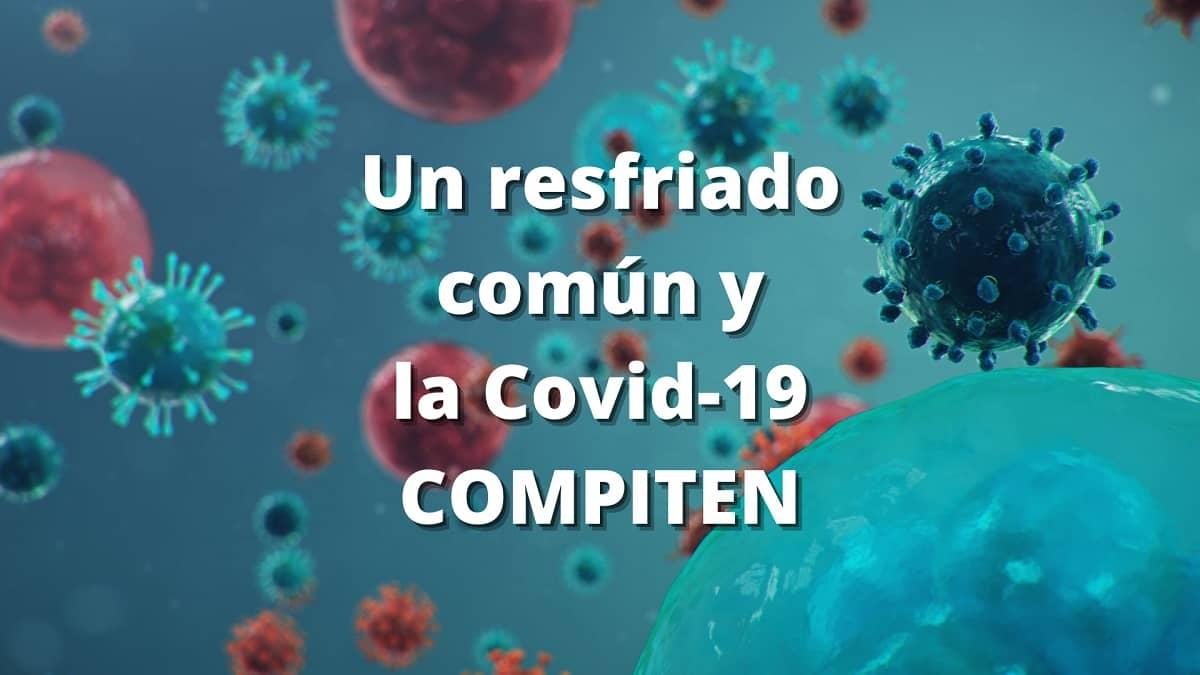Un estudio muestra que los virus que causan el resfriado parecen ganar la batalla para infectar las células cuando también está presente el SARS-CoV- 2.