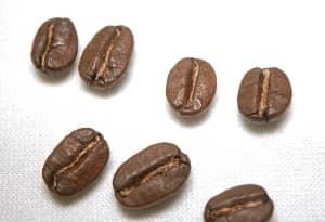 selección-del-grano-de-cafe