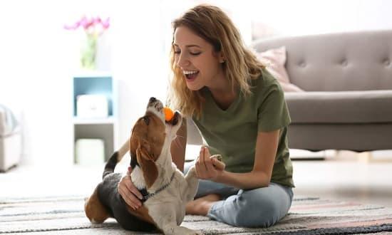 La felicidad de una mascota en casa